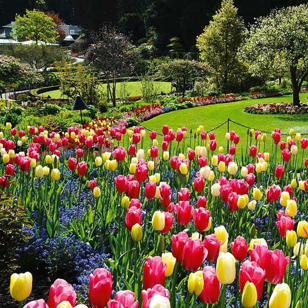 The Butchart Gardens Black Ball Ferry Line Daily Departures To