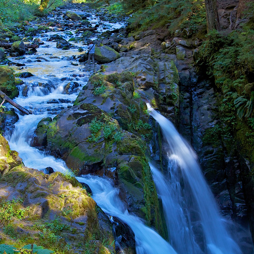 Port Angeles Car Rental: The Best Of Olympic National Park With Walk-On Ferry