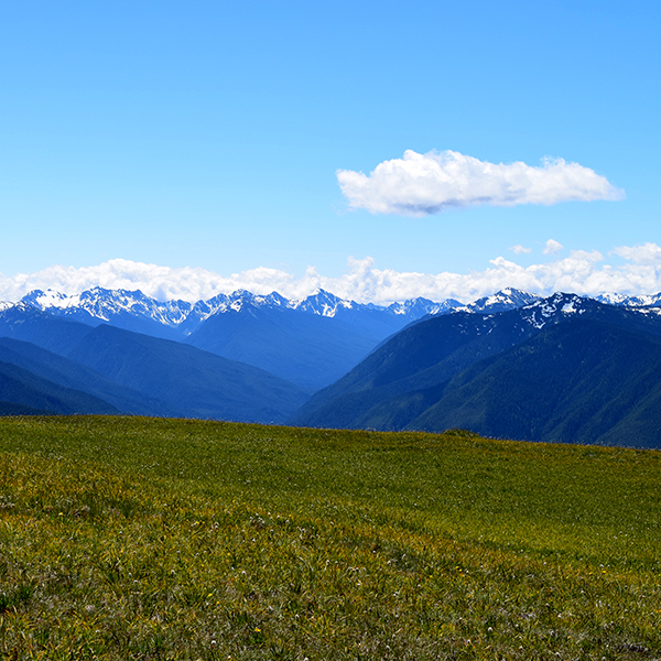 Port Angeles Car Rental: Sol Duc Falls And Hurricane Ridge Full Day Tour With