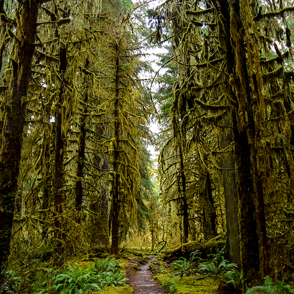 Hoh Rain Forest And Pacific Coast Tour With Olympic Hiking