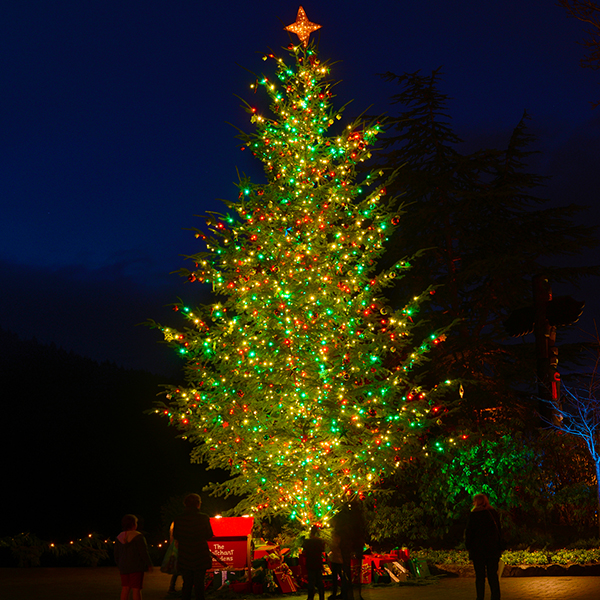 Christmas Magic at The Butchart Gardens with Inn at Laurel Point ...