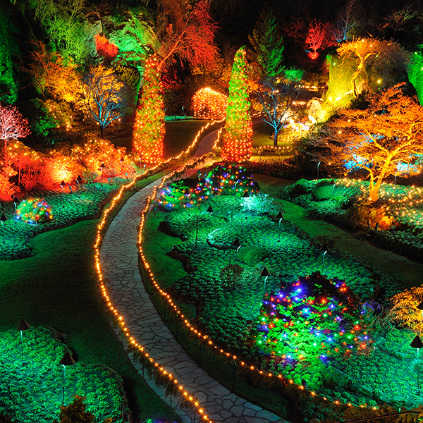 Christmas Magic at The Butchart Gardens with Shuttle Transportation ...