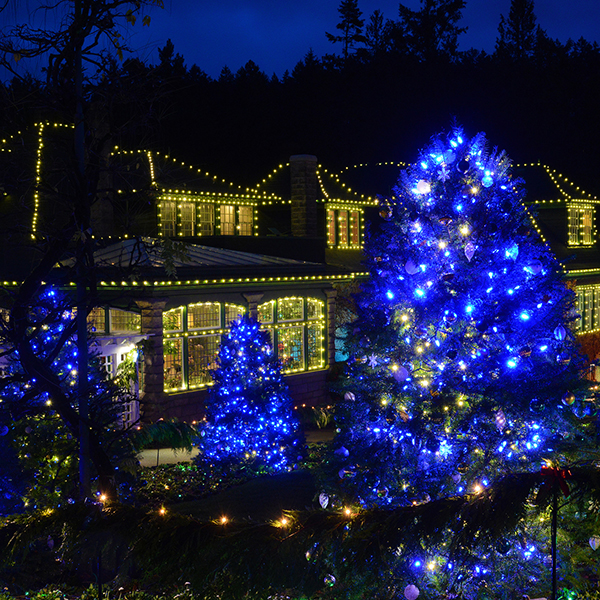 Christmas Magic At The Butchart Gardens With Royal Scot Hotel And Ferry Black Ball Ferry Line